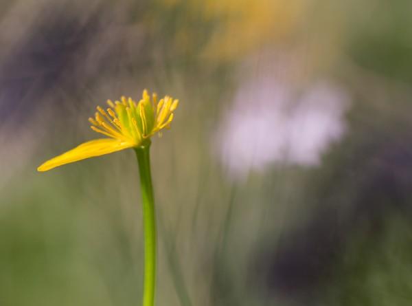 Fleur de printemps-2