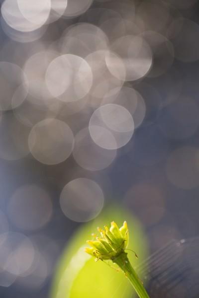 Fleur et flares