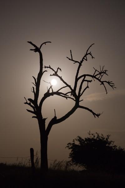 La Lune dans l'arbre