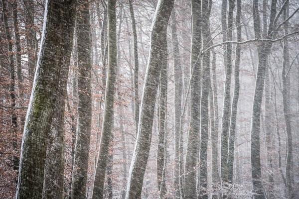 Vent fort tempête de neige dans la forêt