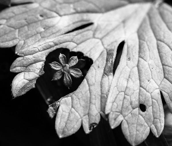 Feuilles-vegetal-plante-noir-et-blanc