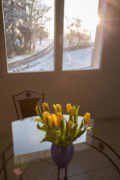 Bouquet de tulipe sur une tableannonçant le printemps et dernière neige