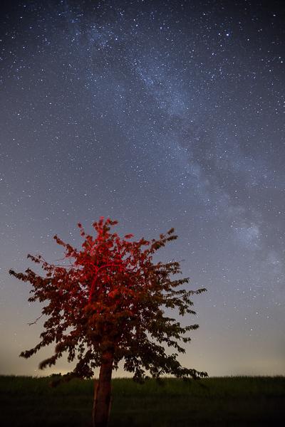 Sous la voûte céleste et la voie lactée, un arbre rouge