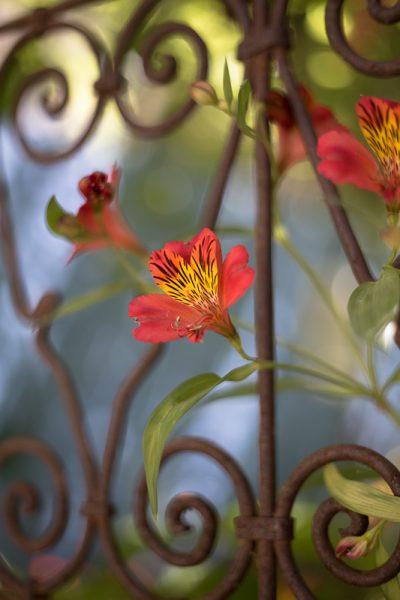 Une fleur pour un jardin secret