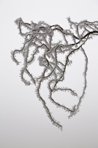 Le froid et le givre ont habillé cette branche d'arbre
