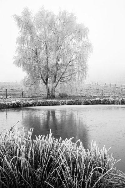 Paysage recouvert de givre, ambiance hivernale au bord d'un étang