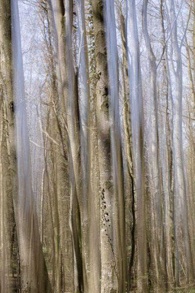 Troncs d'arbres en surimpression