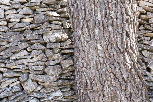 Mimétisme. Détail d'un tronc d'arbre devant un mur en pierres