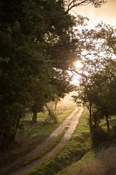 Lueurs matinales sur un chemin du Sundgau en Alsace