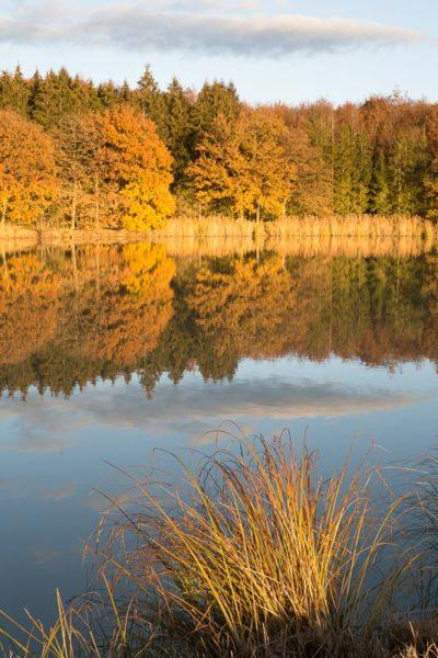 Couleurs d'automne au bord d'un étang du Sundgau dans le sud de l'Alsace