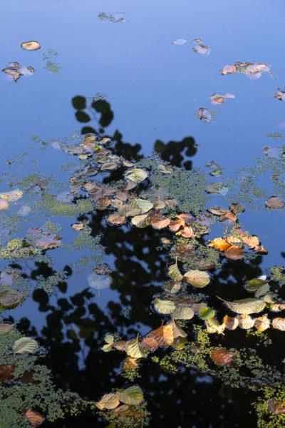 Feuilles mortes d'automne flottant sur une eau calme.