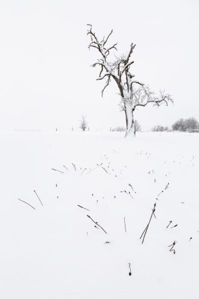 Arbre mort sous la neige, photo minimaliste.